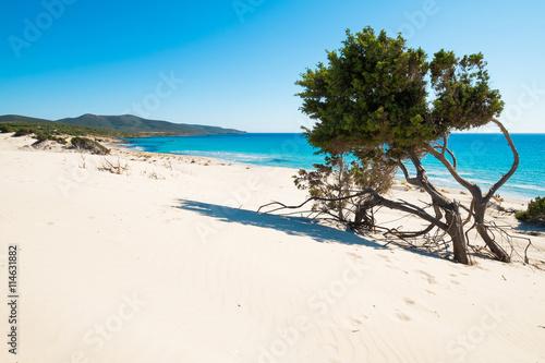 Photo  Sardinia beach