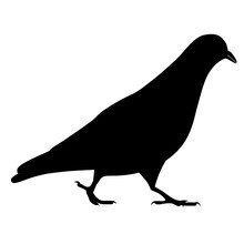 Going Black Pigeon Silhouette