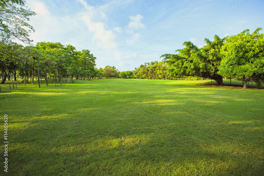 Fototapety, obrazy: morning light in public park and green grass garden field ,tree