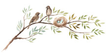 Two Birds With A Nest On The Tree Branch. Blue Eggs In Nest Of Song Thrush. Hand-drawn Watercolor Illustration.