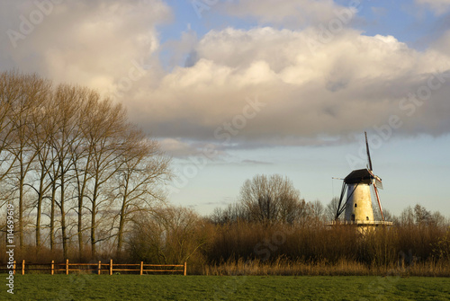 Foto auf AluDibond Schmetterling Windmill the Butterfly