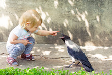Girl Playing With A Hooded Crow