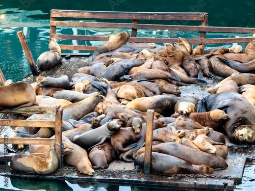 Keuken foto achterwand San Francisco Sea lions in Monterey harbor, California