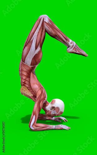 yoga energy, yoga international, yoga back, yoga stretches, yoga adrenal glands, yoga leg workout, yoga history, yoga skin, yoga peace, yoga anatomy, yoga strength, yoga mind, yoga bones, on yoga muscle map