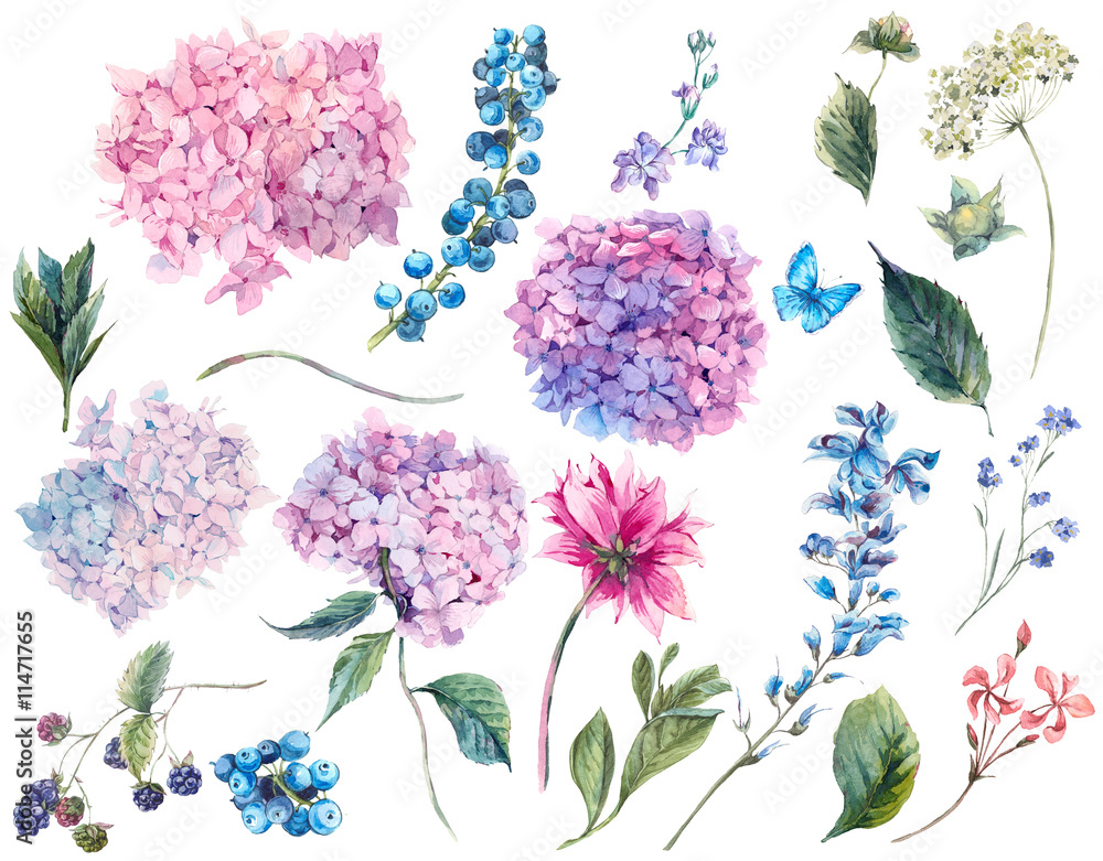 Fototapety, obrazy: Set vintage watercolor elements of Hydrangea