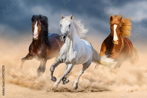 Fotografering  Three horse with long mane run gallop in desert