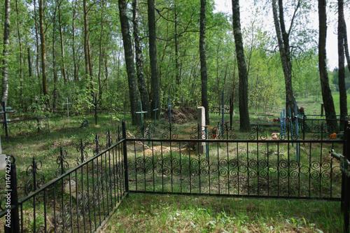 Fotobehang Bossen old mossy cemetery