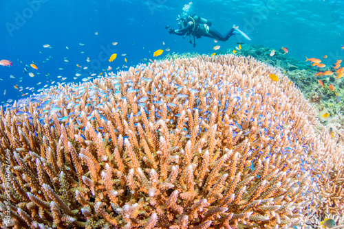 obraz lub plakat Coral garden