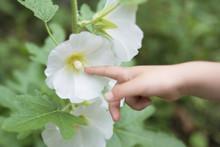白い花を触る子供の手