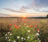Fototapeta Kwiaty - Piękny mglisty i kolorowy poranek nad wiosenną,kwiecistą łąką