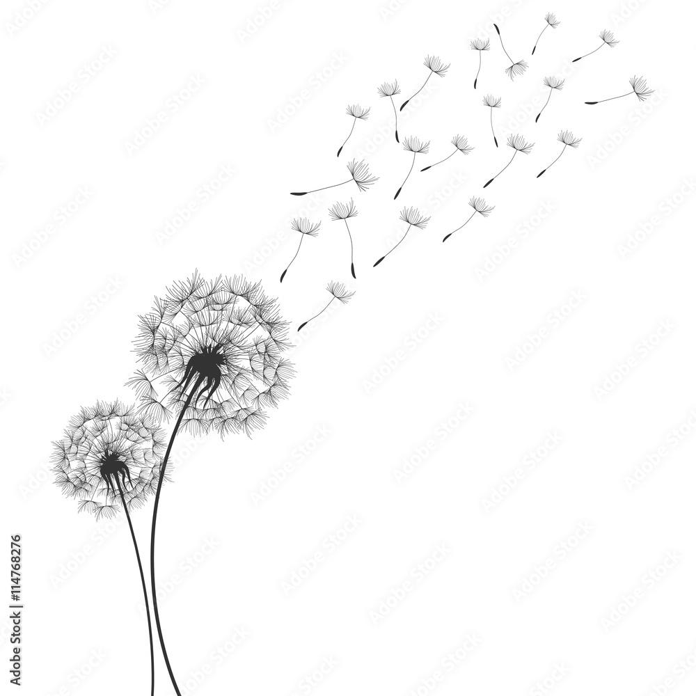 Fototapety, obrazy: Dandelions