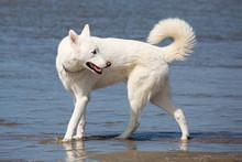 Wunderschöner Hund Am Strand