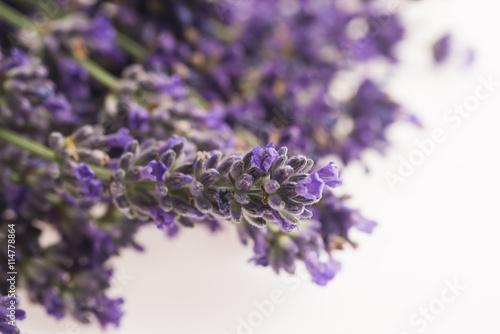 In de dag Lavendel lavender flower