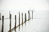 Northern Sea landscape - 114807025