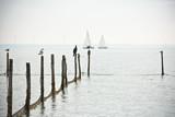 Northern Sea landscape - 114813252