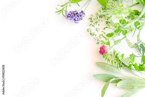 medicinal herbs on white background Canvas Print