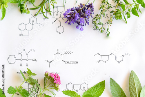 Fotografia  medicinal herbs on science background
