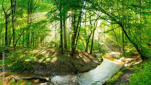 Fototapeten Wald Wald mit Bach bei Sonnenschein
