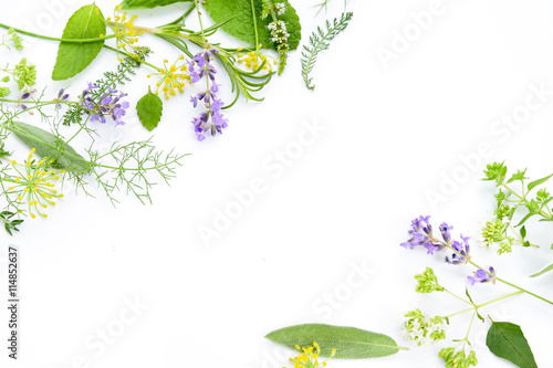 variety of fresh herbs on white background Canvas Print