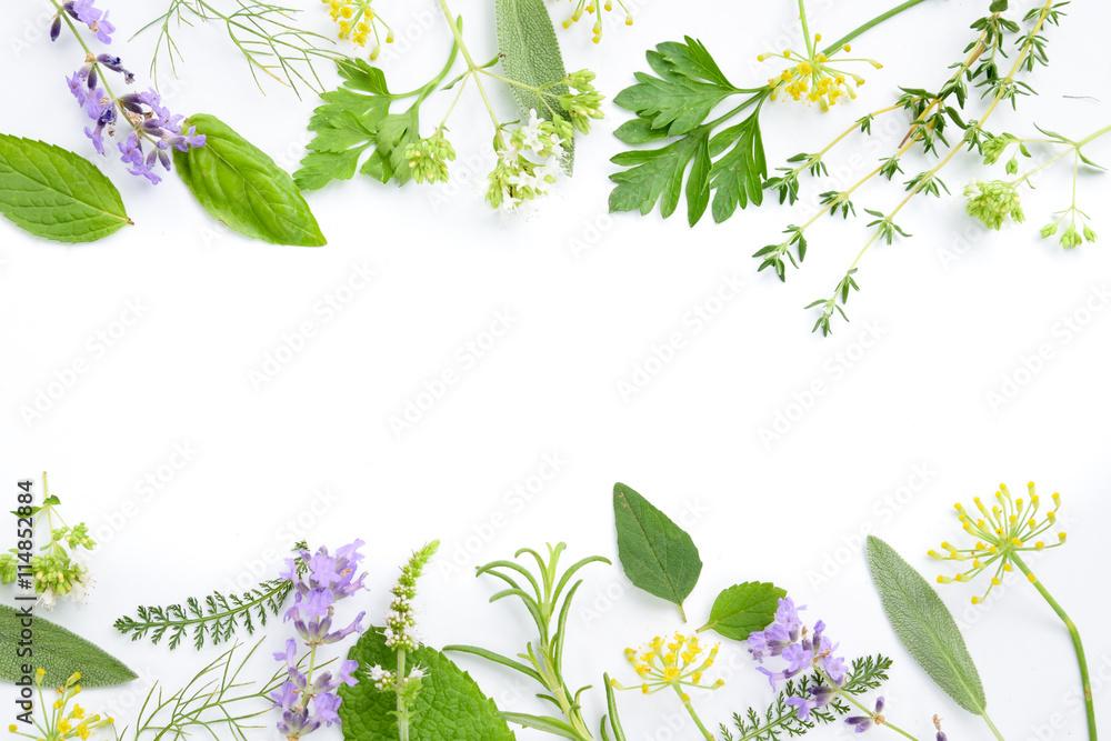 Fototapety, obrazy: variety of fresh herbs on white background