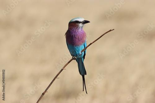 fototapeta na ścianę Bird