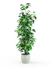 Green Potted Plant Isolated On White Background. 3D Rendering, 3D Illustration.