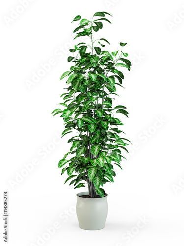 Leinwand Poster Green potted plant isolated on white background