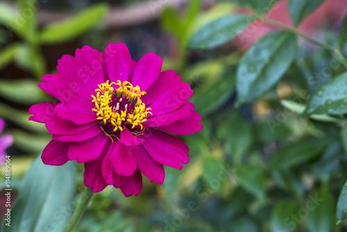 Fotografie, Obraz  Pink flower wirh green blurred background