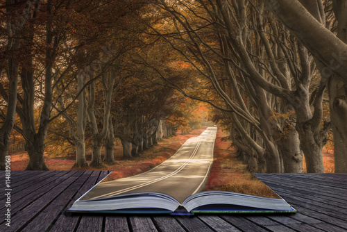 Photo  Beautiful surreal alternate colored forest landscape