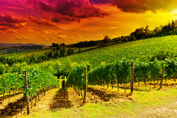 Fototapeta Do restauracji Vineyards at Sunset