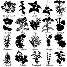 Set Of Medicinal And Healing Herbs Silhouettes. Hand Drawn Vector Illustrations.