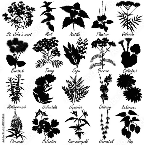 Photo  Set of medicinal and healing herbs silhouettes
