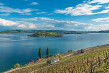 Vineyard By The Lake Of Biel, Switzerland