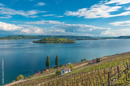 Fotografía  Vineyard by the lake of Biel, Switzerland