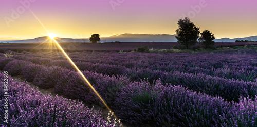 Foto auf AluDibond Lavendel levé de soleil sur un champ de lavande