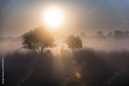 plakat Morning sun shinnig throw the tree. Early morning on meadow.