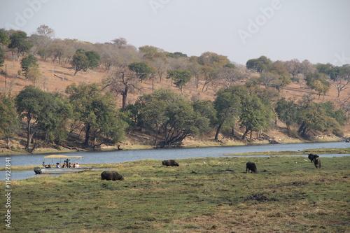 Aluminium Prints Bison Safari-Tour, Okavango Delta