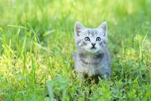 Beautiful Little Cat In Green Grass, Outdoors