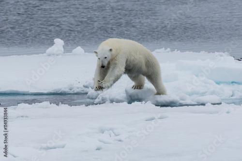 Poster Ijsbeer Eisbär, Eisbären, Packeis, Eis, Spitzbergen, Norwegen, Tier, Säugetier, Wasser