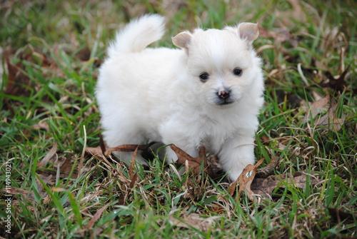 Fotografie, Obraz  puppies