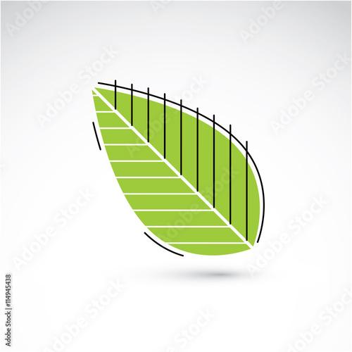 Obraz Hand-drawn illustration of simple beech tree leaf isolated. Gree - fototapety do salonu