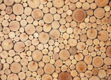 Tree Stumps Background