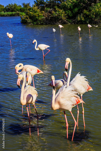 plakat Exotic birds standing in Rhone Delta