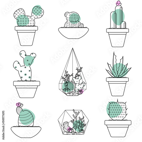 Set Of Succulent Plants And Cactus In Pots And Glass Terrariums