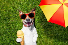 Dog With Ice Cream Under Umbrella