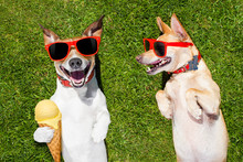 Two Funny Dogs With Ice Cream