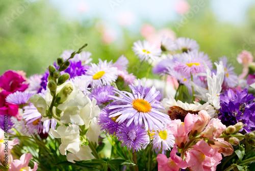 Fototapety, obrazy: summer flowers