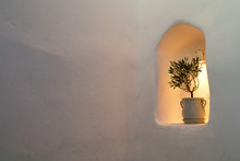 Little Olive Tree In Flower Pot Into The Stone Wall Of House. Free Place For Your Design