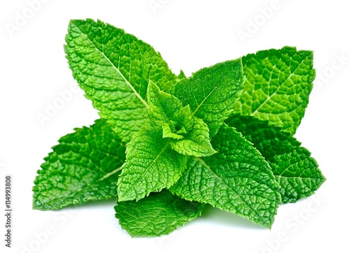 Garden Poster Aromatische Mint leaf close up