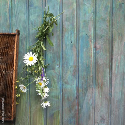Fototapeta Daisy And Honey Frames obraz na płótnie